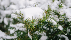 Snow on leaf Royalty Free Stock Photos