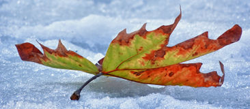 Snow and leaf Stock Photo