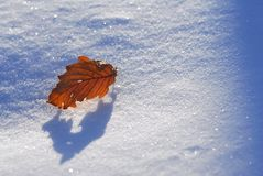 Snow on the leaves Stock Photos