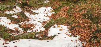 Snow and leaves Royalty Free Stock Photo