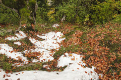 Snow and leaves Stock Image