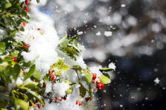 Snow on leaves Royalty Free Stock Images