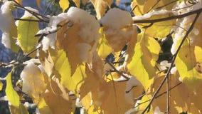 Snow on leaves stock footage