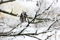 Snow on leaves. Frost. Cold. Winter. Snow. Flowers stock images