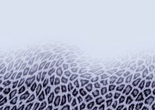 Snow Leopard  background Royalty Free Stock Images