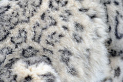 Snow leopard fur. Snow leopard close up abstract fur Stock Photos
