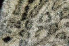 Snow leopard fur texture Stock Photos