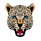 Snow leopard head face realistic color Royalty Free Stock Image