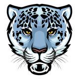 Snow Leopard Head. Vector of Snow Leopard Head royalty free illustration