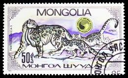 Snow Leopard Panthera Uncia kobieta, Yung, Panthera Uncias seria około 1985, zdjęcie stock