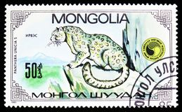 Snow Leopard Panthera Uncia, Panthera Uncias seria około 1985, obraz stock