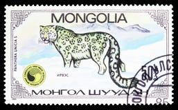 Snow Leopard Panthera Uncia, Panthera Uncias seria około 1985, zdjęcie royalty free
