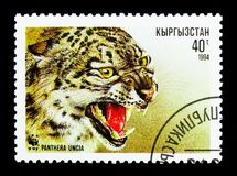 Snow Leopard (Panthera uncia), WWF serie, circa 1994. MOSCOW, RUSSIA - NOVEMBER 26, 2017: A stamp printed in Kyrgyzstan shows Snow Leopard &#x28 Stock Photo