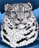 Snow leopard portrait. Snow leopard, irbis - the proud inhabitant of Asian mountains. In the nature of their eye of green or yellow color. Blue color of eyes - a Stock Images