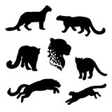 Snow leopard set vector. Snow leopard set of silhouettes vector vector illustration