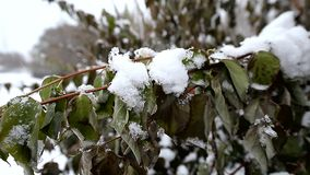 Snow lies on the branches with remaining leaves. Winter stock video footage