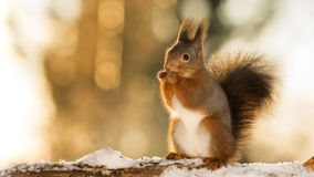 In snow light Royalty Free Stock Image