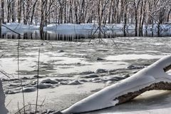 Snow on a log in the Grand River Stock Image