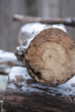 Snow on logs Stock Photography