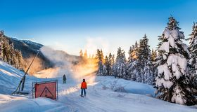 Snow making on a cat track next to snow covered trees. royalty free stock image