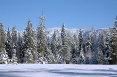 Snow Meadow. Mountain meadow with snowed trees and a hill on background Stock Image