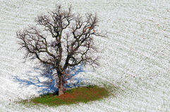 Snow is melting Stock Image