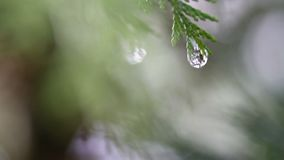 Snow melting on buds on branches of winter trees. Closeup of water drops from melting snow over blurred trees background. Nature winter or spring background stock footage