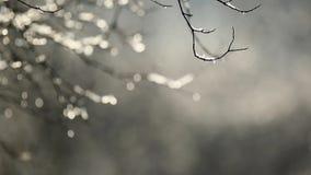 Snow melting stock footage