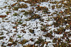 Snow melting on the ground. Icy snow melting on the ground Stock Photo