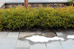 Snow melting on slate pavers with boxwoods. Grate Royalty Free Stock Photos