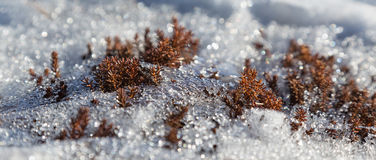 Snow melting Stock Images