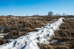 Snow melts and accumulated melt water forms a swamp royalty free stock photos