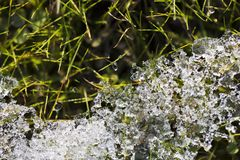 Snow melts on a background of green grass. Royalty Free Stock Photos