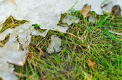 Snow melts on the grass in springtime. royalty free stock photography