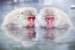 Free Snow Monkey At The Edge Of The Hot Spring Pool Onsen At Jigoku Royalty Free Stock Photo - 108999065