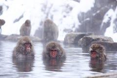 Free Snow Monkey Entering Jigokudani Onsen. Royalty Free Stock Photo - 106842735
