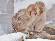 Snow monkey at hot spring Stock Photo
