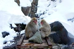 Snow monkey Stock Images