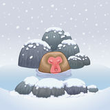 Snow monkey japanese relaxing in onsen hot springs Royalty Free Stock Photos