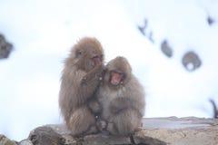 Snow monkey Stock Images