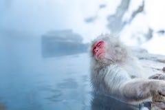 Snow monkey Macaque Onsen. Japanese Snow monkey Macaque in hot spring Onsen Jigokudan Park, Nakano, Japan Stock Images