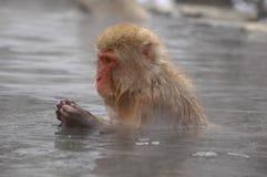 Snow monkey in onsen Stock Photo