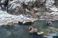 Snow Monkey Park, Yamanouchi, Japan. Royalty Free Stock Photo