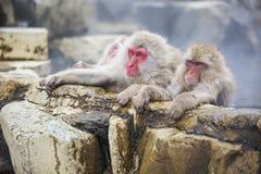 Snow Monkeys Guarding Hot Springs Stock Photos