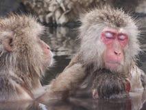 Snow monkeys in hot springs of Nagano,Japan. Snow monkeys (Japanese Macaques) in the onsen hot springs of Nagano,Japan Stock Image