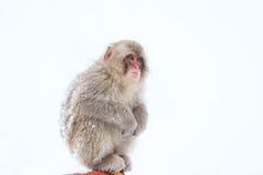 Snow Monkeys in Jigokudani Monkey Park, Nagano Stock Photos
