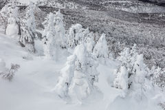 Snow monster or snow frosted trees at Mount Hakkoda. royalty free stock image