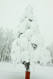 Snow monster on tree Royalty Free Stock Photography