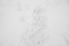 Snow Monsters area Mountain Zao, Japan . Royalty Free Stock Images
