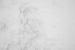 Snow Monsters area Mountain Zao, Japan . Stock Images